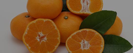 柑橘の販売の件・現在発売中の柑橘